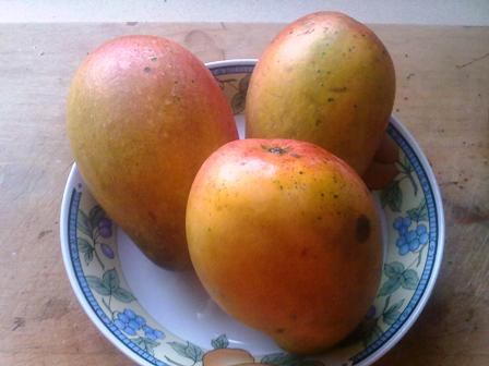 Jamaica East Indian Mangoes