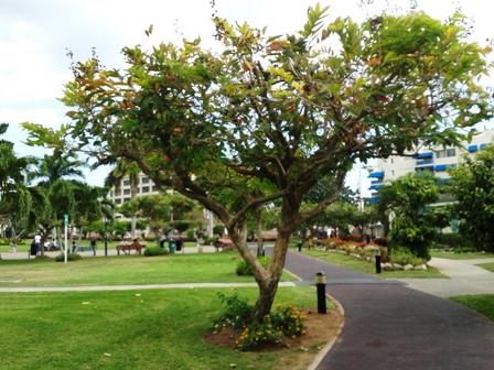 View at Emancipation Park