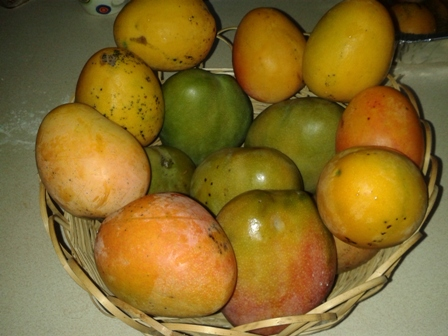 Jamaican Mangoes So Many Types All Delicious