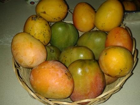 Jamaican Mangoes