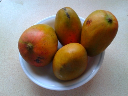 Jamaican Julie Mangoes