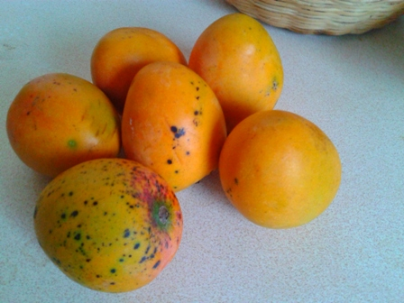 Jamaican Common Mangoes