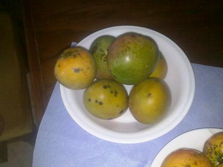 Jamaican Black Mangoes