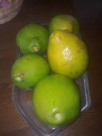 Jamaica Avocado Pears